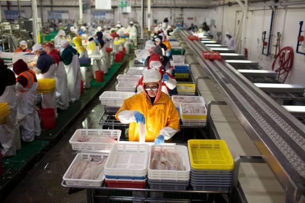 UniSea's fish processing plant