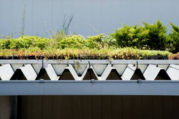 Roof garden experiment on the Nihon Chiko factory