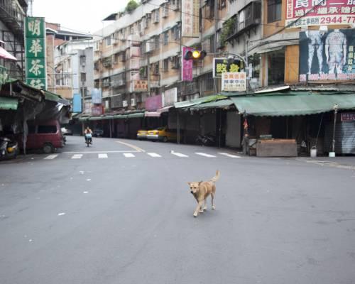 Animal control in Taipei