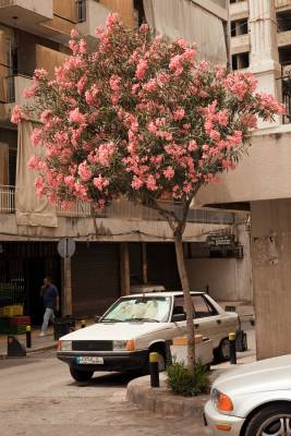 Street scene in Ashrafieh, near Sassine Square