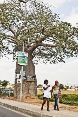 A baobab tree on the outskirts of Luanda