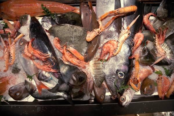 Tuna, pizzonia and shrimp on ice at Trattoria da Cicciotto