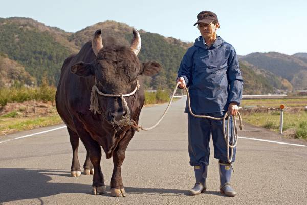 Rice farmer and fighting bull owner Hotatsu Ikeda