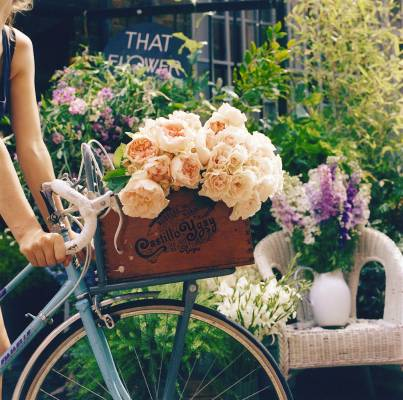 English garden and majolica roses