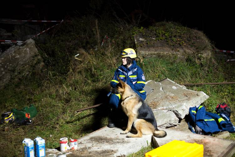 Searching for victims with dogs