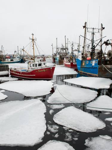 Fishing boats tethered in the harbour, in amongst the broken-up pack ice